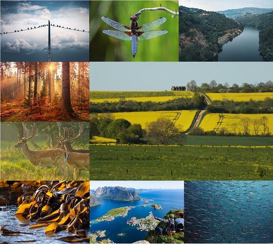 Większa bioróżnorodność do 2030 roku