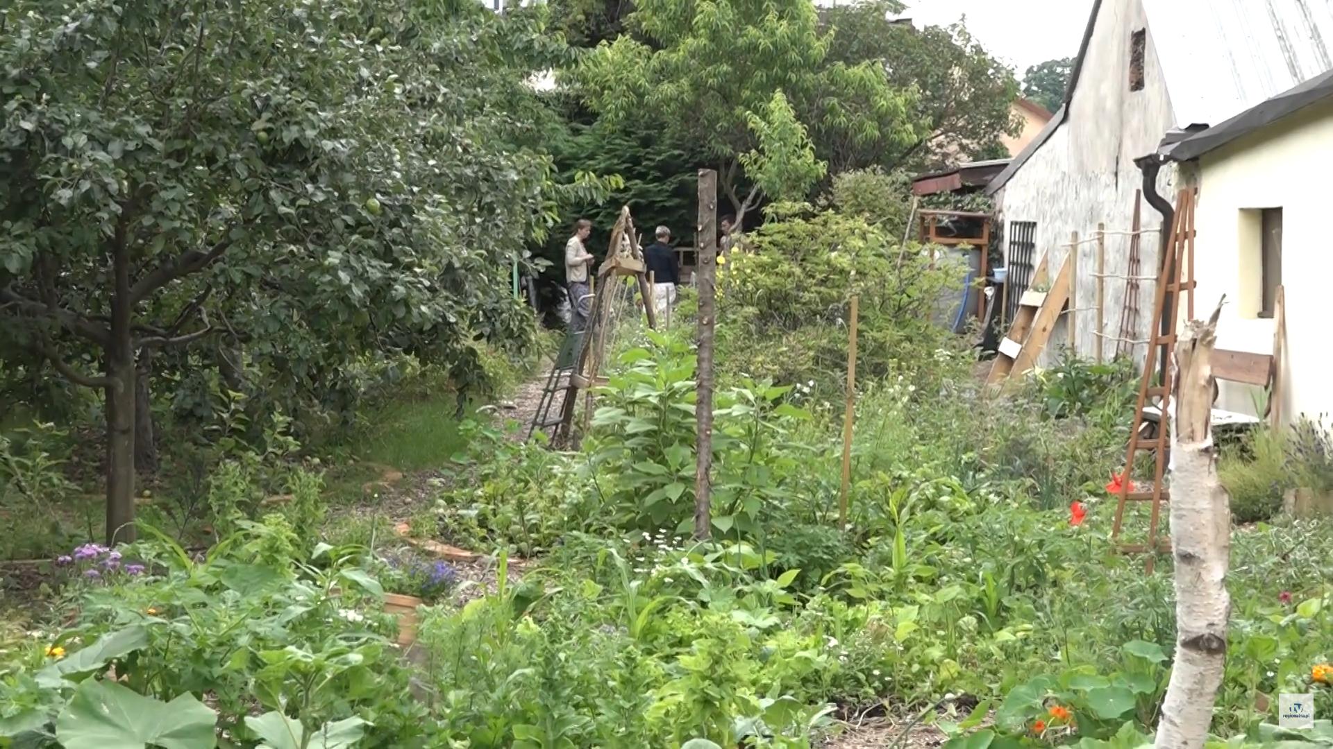 Permakultura w centrum Chocianowa (wideo)