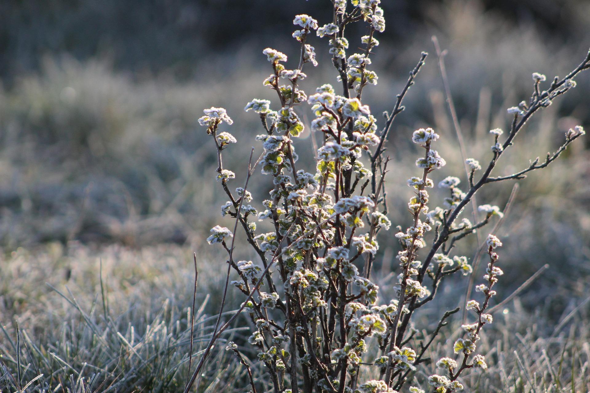 Ostatnie uderzenie zimy? Niskie temperatury także w Chocianowie