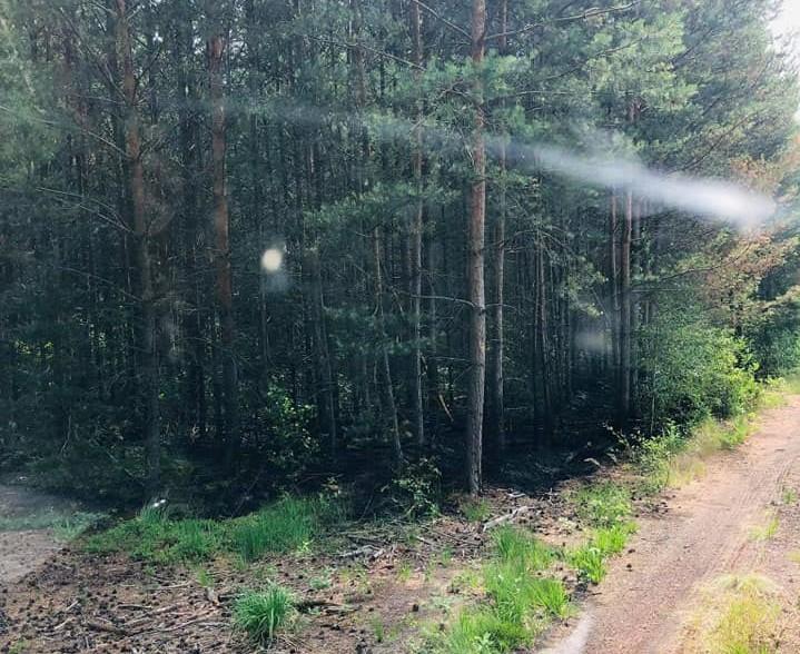 Ochotnicy z Chocianowa szybko ugasili podszycie leśne