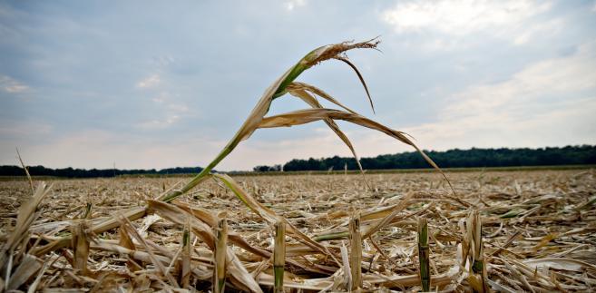 Gotowe protokoły w sprawie suszy do odbioru