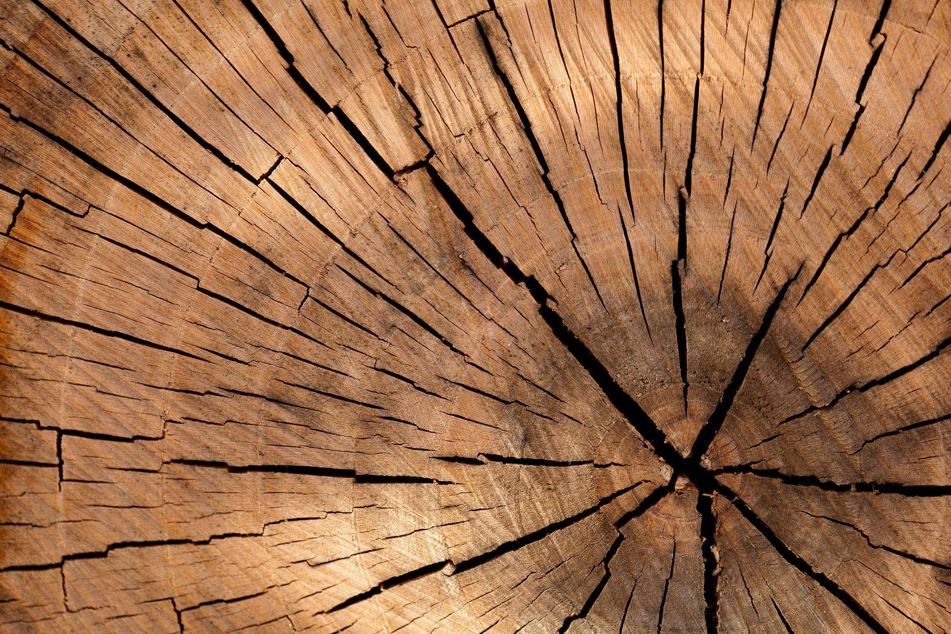 Drewno sprzedają na pniu