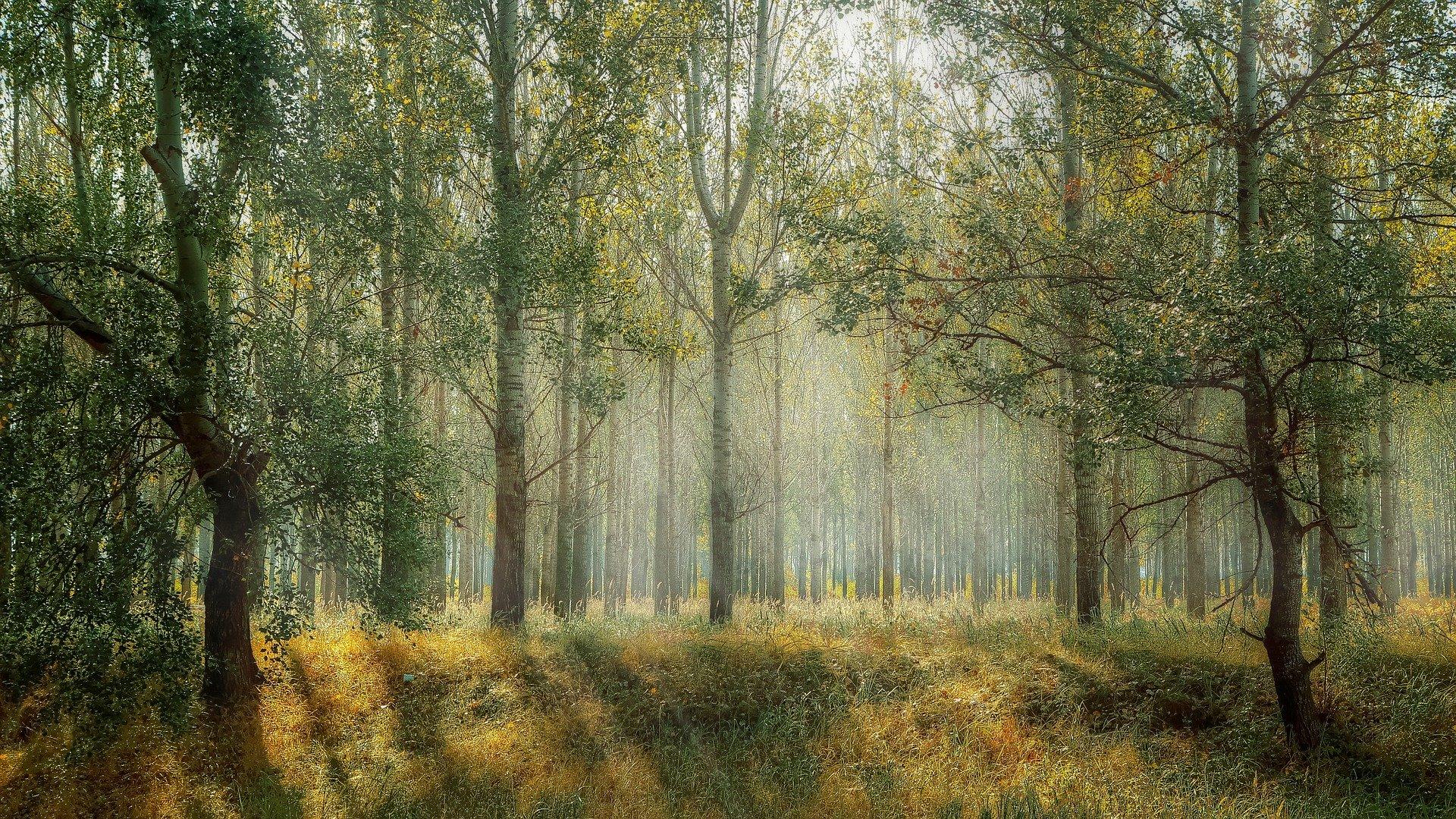 Pieniądze na posadzenie lasu
