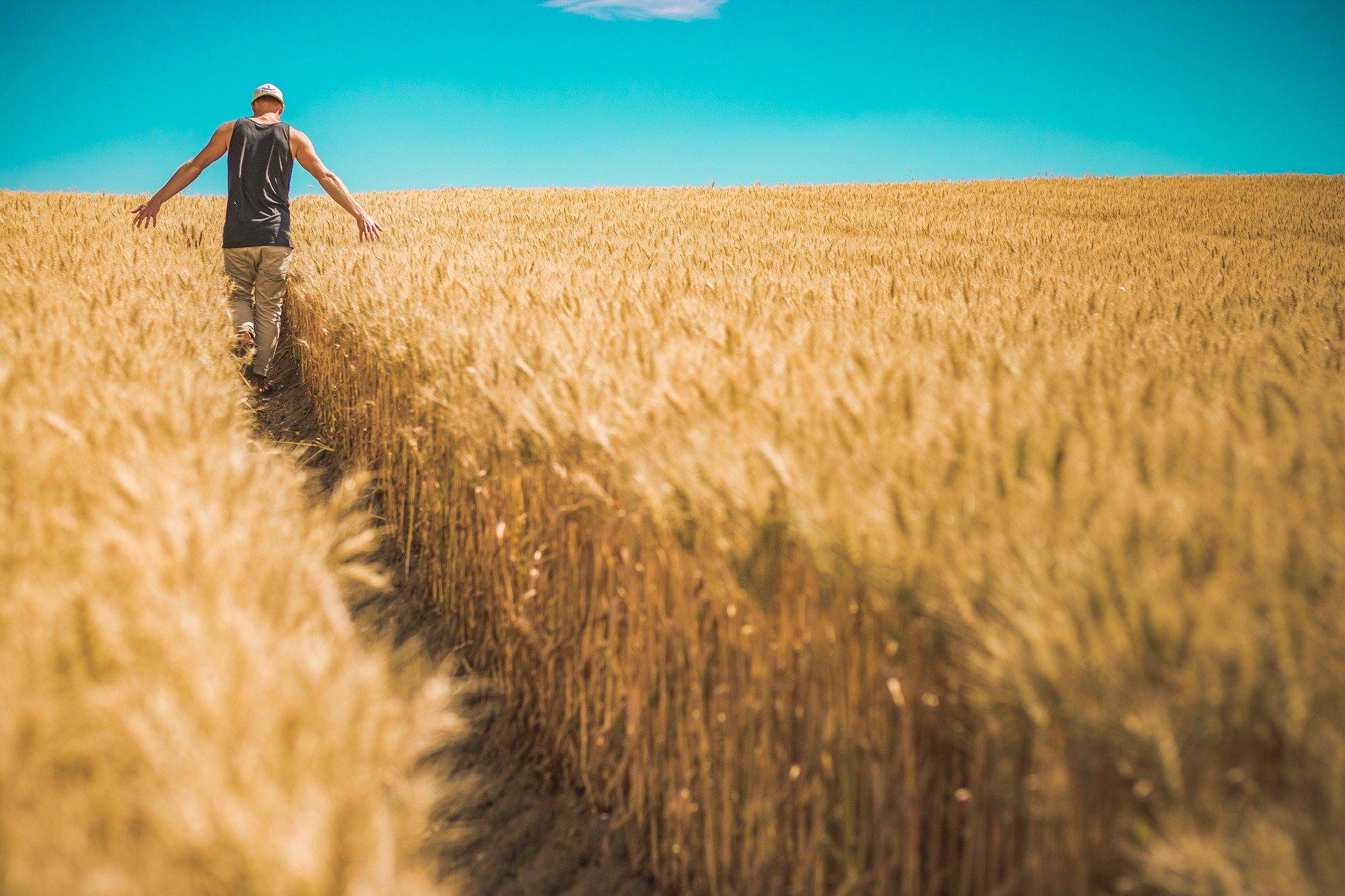 Bezpłatnie przeszkolą rolników