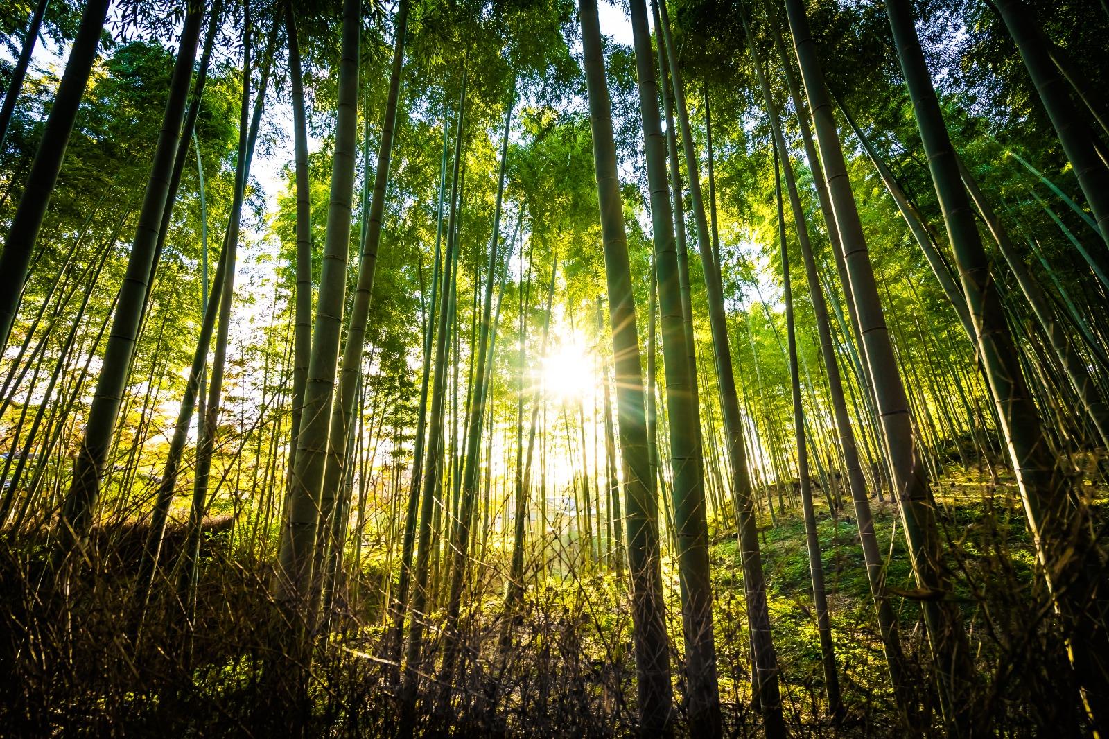 Prywatny las z dotacją