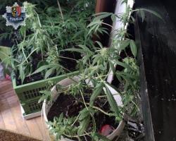 Trzy lata za dziewięć nielegalnych roślin